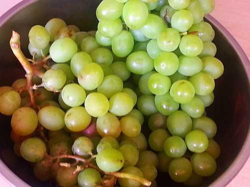 van Niekerk 2013 Table Grape