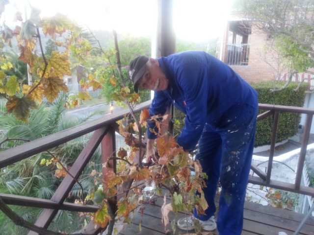 Mike pruning the vine