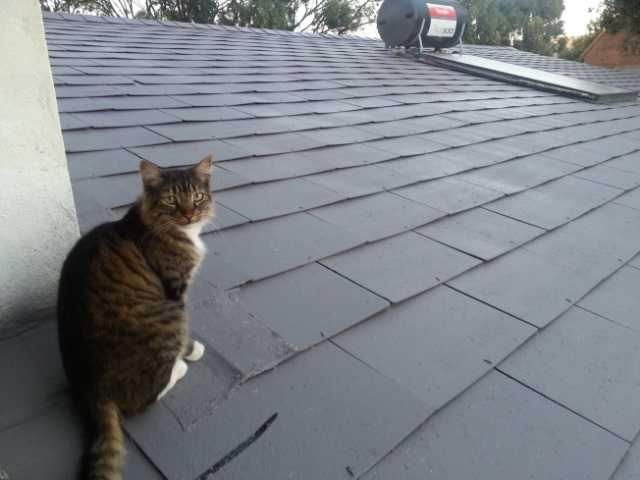 Truffles inspecting the newly painted roof