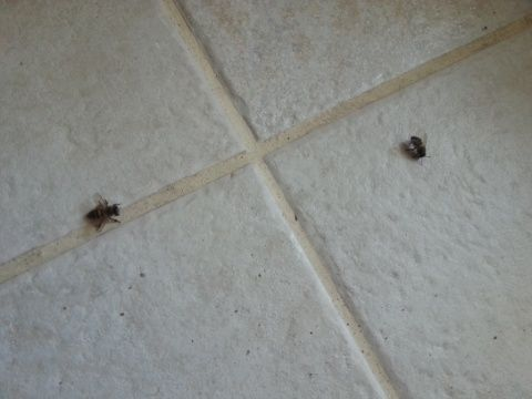 Bees on the floor