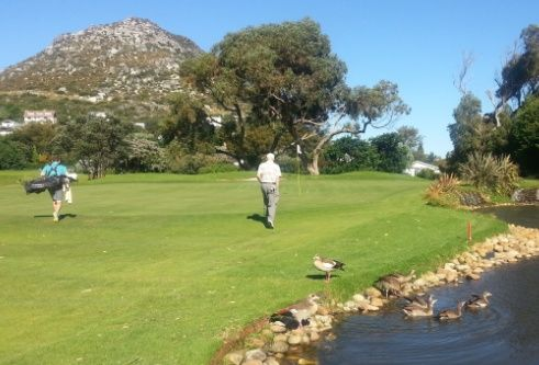 Geese and golfers