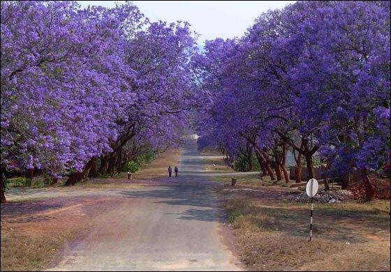 From www.experiencezimbabwe.com