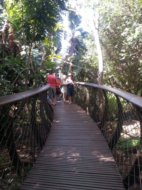 On the boomslang