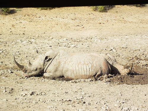 Rhino blending nicely