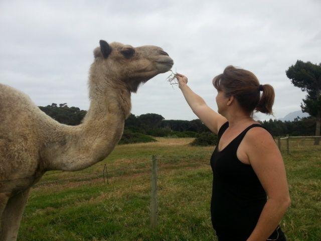 Sue feeding the camel