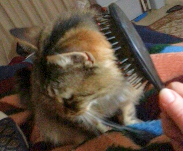 Truffles being groomed