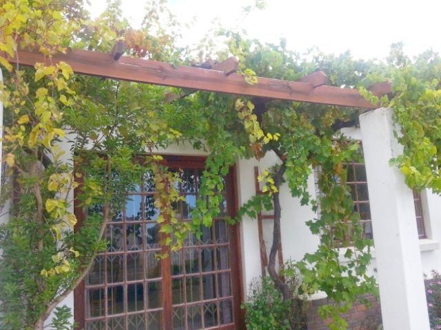 The vine today