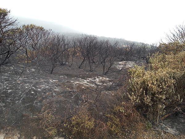 Burned Chapmans peak