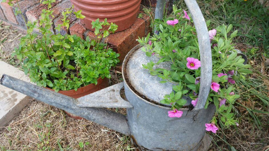 thousand-bells-in-a-watering-can